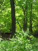 Indiana_Dunes_forest_2009_2.JPG