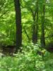 Indiana_Dunes_forest_2009_2.JPG