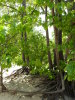 Indiana_Dunes_forest_2009_6.JPG